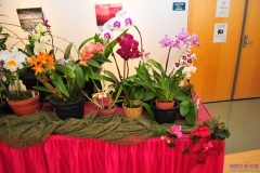 GLVOS 2016 Orchid Show 0003