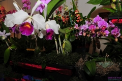 GLVOS 2016 Orchid Show 0015