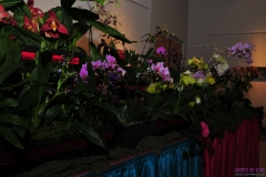 GLVOS 2016 Orchid Show 0016