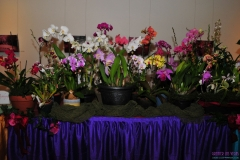 GLVOS 2016 Orchid Show 0017