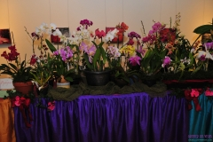 GLVOS 2016 Orchid Show 0018