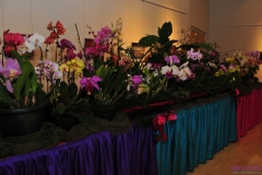 GLVOS 2016 Orchid Show 0019