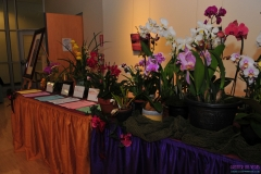 GLVOS 2016 Orchid Show 0020
